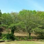 おゆみ野さくら公園の新緑