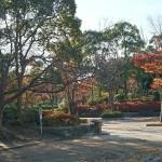 おゆみ野はるのみち公園の紅葉(1)