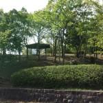 おゆみ野はるのみち公園の新緑
