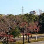 おゆみ野はるのみち公園の紅葉(2)