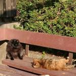 おゆみ野はるのみち公園の野生猫(4)