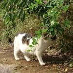 おゆみ野はるのみち公園の野生猫(3)