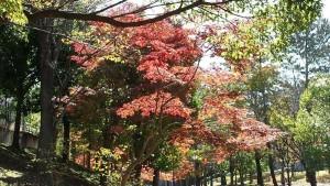 四季の道の紅葉