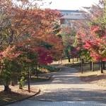 おゆみ野春の道の紅葉(1)