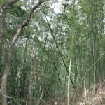 おゆみ野有吉公園の竹林