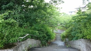 梅雨のさくら公園2