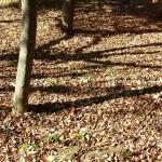 おゆみ野はるのみち公園の落ち葉の絨毯