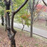 秋のおゆみ野春の道