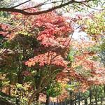 おゆみ野春の道の紅葉