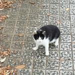 おゆみ野はるのみち公園の野生猫