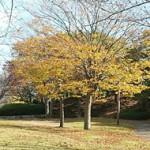 おゆみ野はるのみち公園の落葉