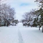 おゆみ野春の道の雪景色